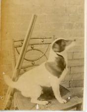 Dressage de chien  Vintage albumen print.  Tirage albuminé  7,5x10  Circa