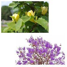 schöner Tulpenbaum und farbenfroher Palisanderbaum - unser Bäume-Spar-Set !