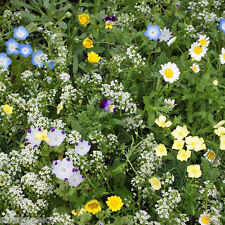 Alternative Lawn Mix Heirloom Seeds -Non-GMO - Untreated - Open Pollinated!