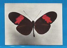 Carte Publicitaire Papillons Héliconius melpomene  Guyane Française