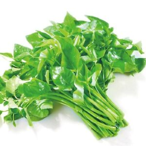 Large Leaf Water Spinach Vegetable Plant Seeds About 60pcs 15G