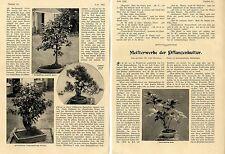 Prof. U. Dammer: capolavori della cultura PIANTE (BONSAI) foto-report di 1907