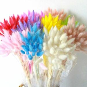 Set Natural Dried Pampas Grass Reed Home Wedding Flower Bunch HOME Decor 30PCS