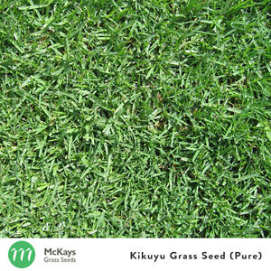 McKays Kikuyu Grass Seed Pure- 5kg- Covers 500m2 Lawn seed 100% PURE
