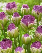 Tulip Bulbs Double Flowering 'Exquisit' WPC Prins Pack x10