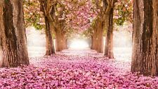PRETTY  PINK CHERRY BLOSSOM TREES CANVAS PICTURE WALL ART MEDIUM  20x30 INCHES