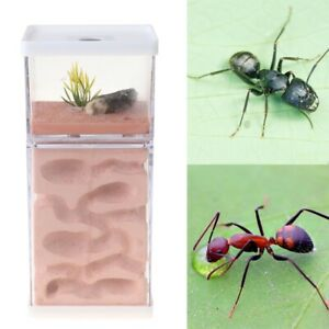 Ant Earth Nest Ant Farm Landscaping Housing Formicarium For Ant Colony