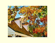 Fall leaves autumn matted picture interior wall decor Rea fine art photograph