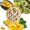 10 Fresh seeds of Casearia acuminata Rare Tropical Fruit