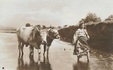 RPPC,Romania,Pretty Womn in River,Leading 2 Cows,Romanian Costume,c.1909