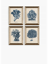 Melissa Wang - Sea Coral Study Framed Prints Set of 4 47 x 37cm Blue/Multi