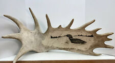 """Moose Antler Carving Signed """"Csc or Ccs�"""