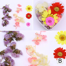 Real Dry Dried Flowers 3D Nail Art Decorations for Acrylic UV Gel DIY Manicure