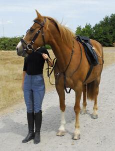 Windsor Leather Horse Pony Cob Shetland Running Martingale Black Brown