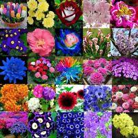 5-10000x Mix Blumen Samen Blumensamen Garten Pflanzen Blumme Seeds Staudensamen