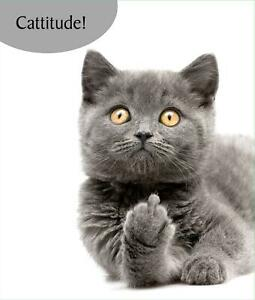 Funny Grey Cat Greeting Card Rude Naughty Birthday Card Cattitude Cat Lovers