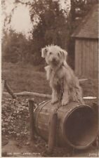 Judges Real Photo Postcard. Home sweet Home. Cute Dog on Barrel. Mailed 1927