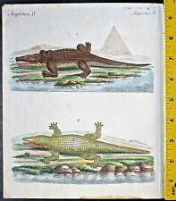 Nile Crocodile,Bertuch,Bilderbuch,handc.Engravi.ca.1792