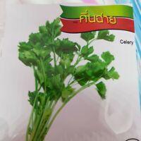 CELERY Thai vegetable plant high quality seeds 7,500 seeds CHAI TAI