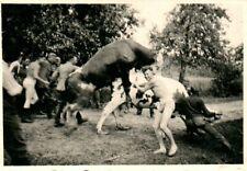 Foto, Spass mit einem Beute Stier in Frankreich  (N)20992
