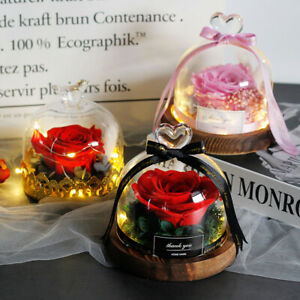 Rose Exclusive Glass Dome Gift Day Preserved Beauty  Beast Lover Lights Led Gf