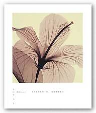 PHOTO FLORAL ART PRINT Hibiscus by Steven Meyers 8x8