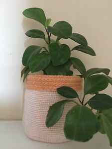 Hand Crocheted Plant Pot Cover/Storage Basket