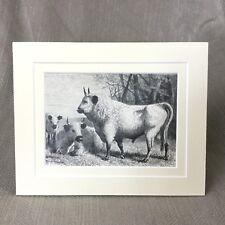 antiguo estampado Victoriano Grabado SALVAJE ganado Vacas AT cadzow Castillo