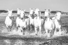 STUNNING GALLOPING WHITE HORSES CANVAS #46 BEAUTIFUL HORSE FRAMED CANVAS PICTURE