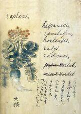 """Raphanus hispanicus """"Un Japonais à base de plantes"""" 17th Century plant Anatomy Poster"""