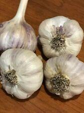 Pre-Order Variety Garlic Seed Sampler Kit Fall Planting - Garden Bulbs Hardneck
