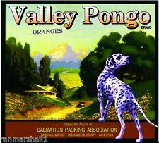 Marshall Canyon Valley Pongo Dalmation Dog Orange Citrus Fruit Crate Label Print