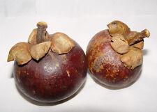 Mangostan - 1kg. de fruta fresca