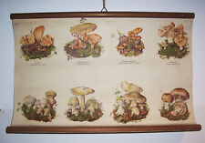 Rollkarte Schulkarte seltene Pilze um 1920/30 Wandtafel Pilzkundler Vintage !