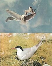 Lot of 5 Vintage Postcards featuring Gulls, Terns  Unused