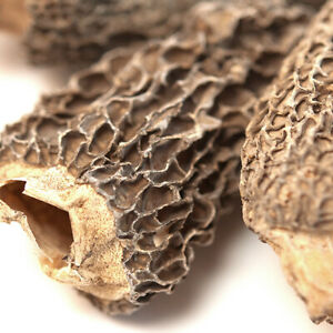 Morel Mushrooms, Dried   Bulk   Spice Jungle