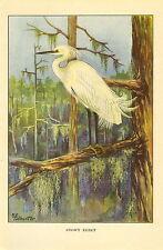 Antique Vintage Scarce T.E. Todhunter Bird Print ~ Snowy Egret