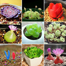 120pcs Rare Mixed Lithops Seeds Living Stones Cactus Succulent Potted Plant Seed