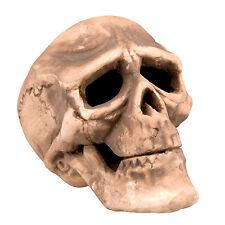 Crâne Humain taille réelle accessoire d'Halloween déguisement horreur NEUF