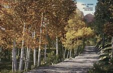 Fall Scene in the Colorado Rockies CO, Golden Trees - Old Vintage Linen Postcard