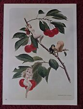 1970 Magazine Art Page ~ Nude Pixie Girls in Cherry Tree by Bill Utterback