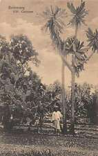 Buitenzorg Indonesia Tall Cactus  Antique Postcard J45374