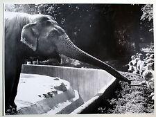Original Foto Großformat Kind füttert Elefant Hagenbeck 27.08.1967 Hamburg