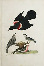 "ORIGINAL Hand Colored Engraving  ""American Ornithology"" Alexander Wilson 1828-29"
