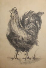 Antique art print hen