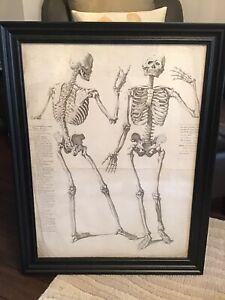 18th Century Georgian Large 2 Skeletons Medical French Etching Skull Framed