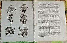 1784 Ancienne Gravure Estampes EO.le Framboisier,Groseillier,Pêcher,Abricotier