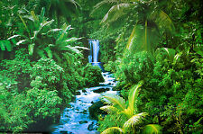 RAIN FOREST - LANDSCAPE PHOTOGRAPHY POSTER (61x91cm)  NEW LICENSED ART