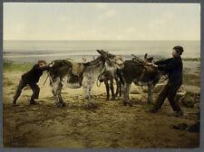 Photoglob Original Enfants et Mulets Vers 1890/1900