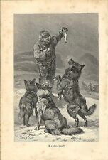 Stampa antica CANI SIBERIAN HUSKY 1891 Old antique print dogs